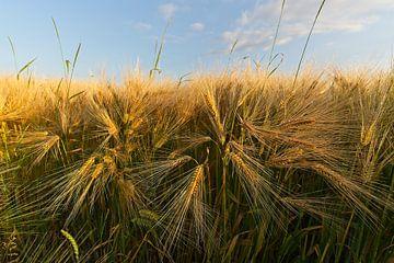 Fine grain