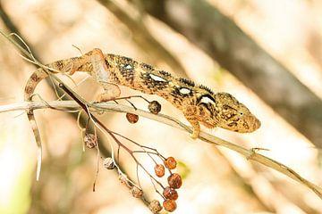 Camouflage Kameleon van Dennis van de Water
