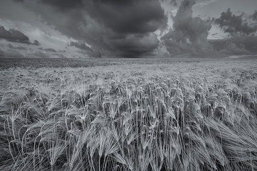 Een weids landschap met mooie wolkenluchten boven de akkers met graan in het Hogeland van Groningen