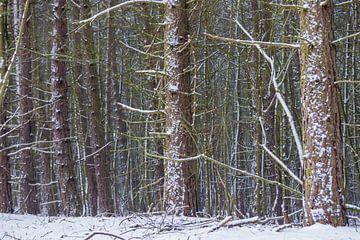 Bäume im Schnee von Merijn Loch