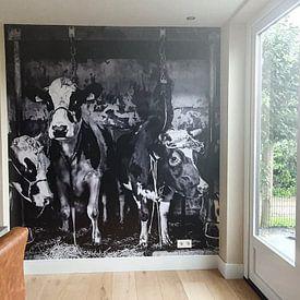 Klantfoto: Koeien in oude stal van Inge Jansen, als naadloos behang
