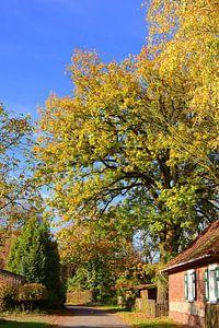 Een dorp in de herfst