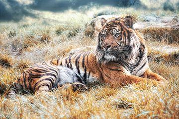 Sumatra Tiger von Joachim G. Pinkawa