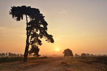 Mooie boom in het Aekingerzand von John Leeninga