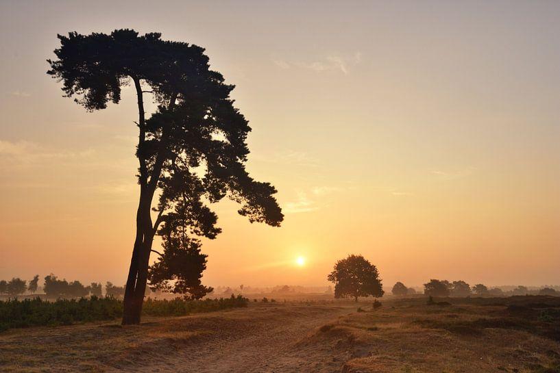 Mooie boom in het Aekingerzand van John Leeninga