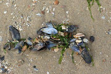 mossel en zeewier op het strand van zeeland van Frans Versteden