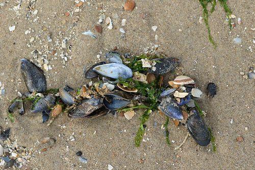 mossel en zeewier op het strand van zeeland
