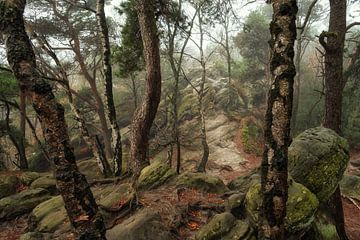 Bomen en rotsen van Martin Podt
