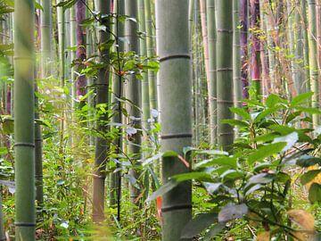 Arashimaya Bamboo Forest - Kyoto von Justin van Schaick