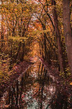 Bomen in Herfstkleuren van Stephan Scheffer