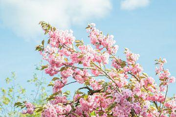 Bloemen boom sur Vera  Vink