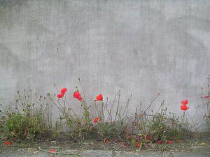 Rode klaprozen sur Dennis Rietbergen