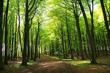 Maiwaldweg van Ostsee Bilder