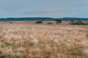 Veluwe-Landschaft von Anouschka Hendriks