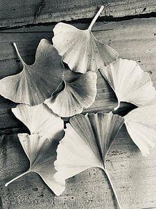 Gingko blaadjes van Emma Van Leur