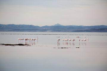 flamingos in het wild van marijke servaes