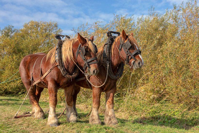 Werkpaarden van Bram van Broekhoven
