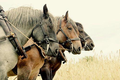 Zeeuwse paardenkracht van Els Fonteine