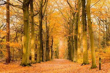 Geel bos van Maja Ooms