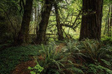 Die Zeit steht still von Joris Pannemans - Loris Photography