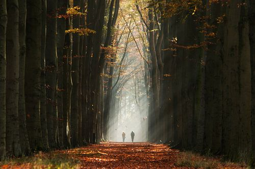 Walking into the Light