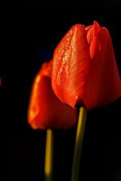 Frühling zittert von René Roos