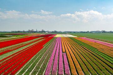 Bollenvelden bij Kloosterburen (Groningen) van Greet ten Have-Bloem