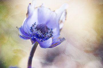 Anemonenblau von natascha verbij