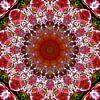 Pompelmo e Tulipani van Frans Blok thumbnail