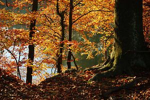 golden fall IV