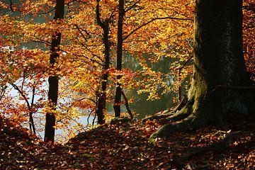 Goldener Herbst IV von Meleah Fotografie