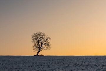 Winter Baum von Daan Kloeg