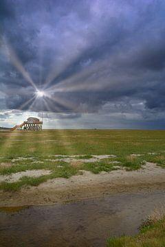 Salzwiesen in Sankt Peter-Ording von Peter Eckert