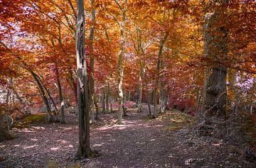 Herfst in het bos van Rietje Bulthuis