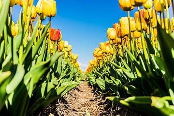 Tulpen van Mkview Fotografie