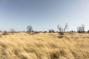 Vegetatie in Botswana's Makgadikgadi Pans National Park van
