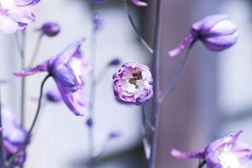 Blume Violett von Agnes Meijer