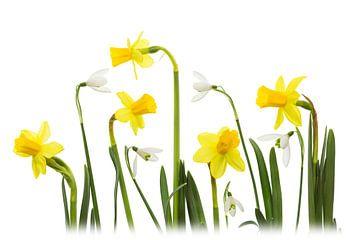 Frühling von Carola Schellekens
