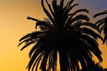 Gros Palmier, coucher de soleil sur Arianor Photography