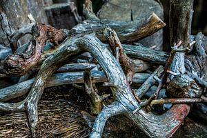 Hout in het bos van Eveline Peters