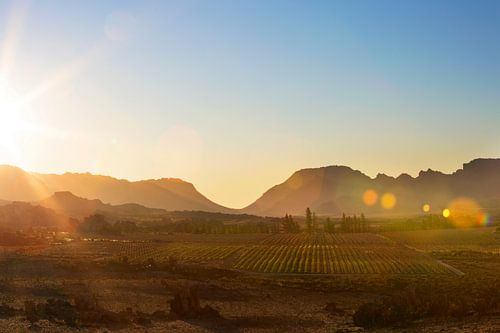 Zonsondergang boven de Afrikaanse wijnvelden