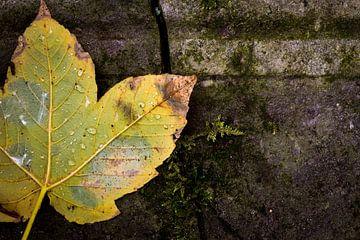 Herfstblad met regendruppels van Jenco van Zalk