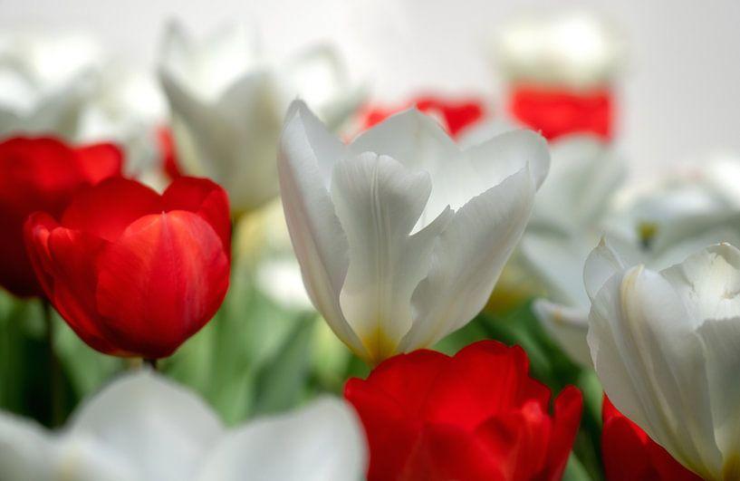 Tulpen van Reinier Snijders