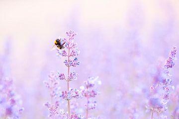 Bourdon mange du pollen sur Francis Dost