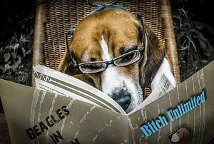 Dirty Beagle