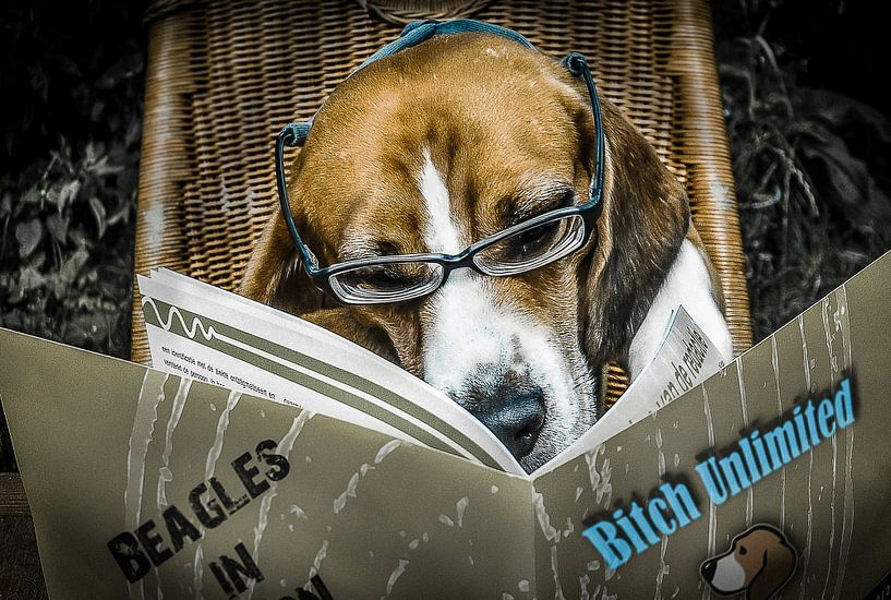 Dirty Beagle van Dennis Timmer