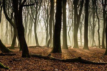 Dansende bomen van René Groenendijk