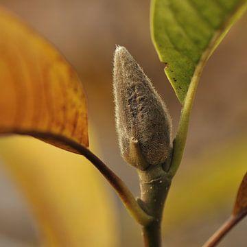 Magnolia in de herfst van Bargo Kunst