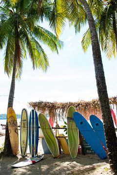 Surfplanken onder de palmbomen van Bianca ter Riet