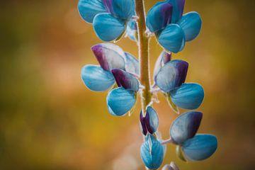 Paarse bloemblaadjes van Stedom Fotografie